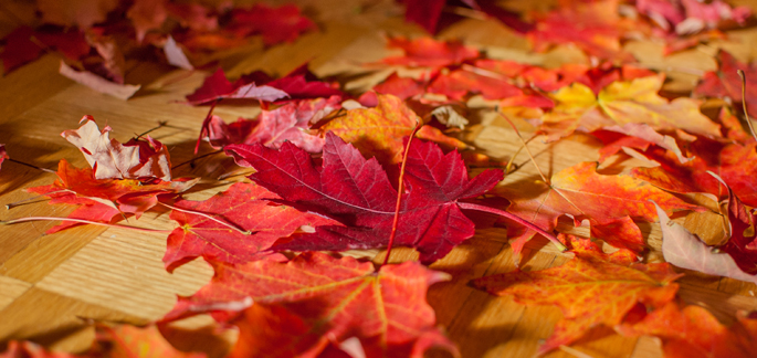 using fall leaves in home decor