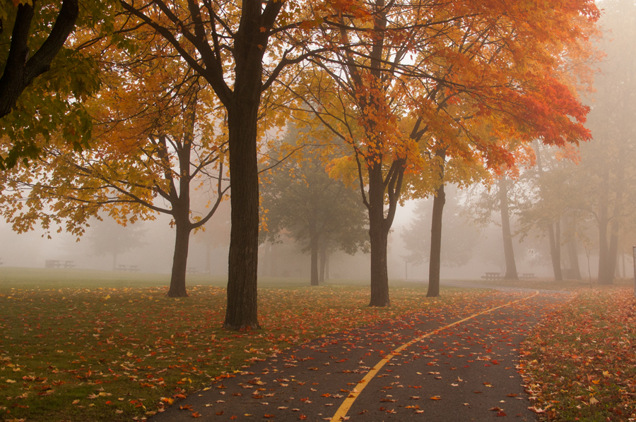 Vincent Massey Park Foggy Bike Path