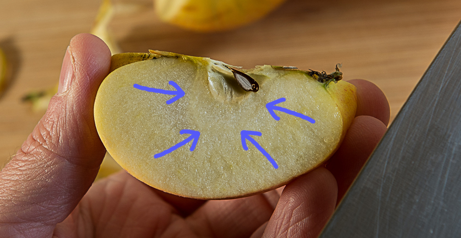 sliced apple showing line of outer pericarp