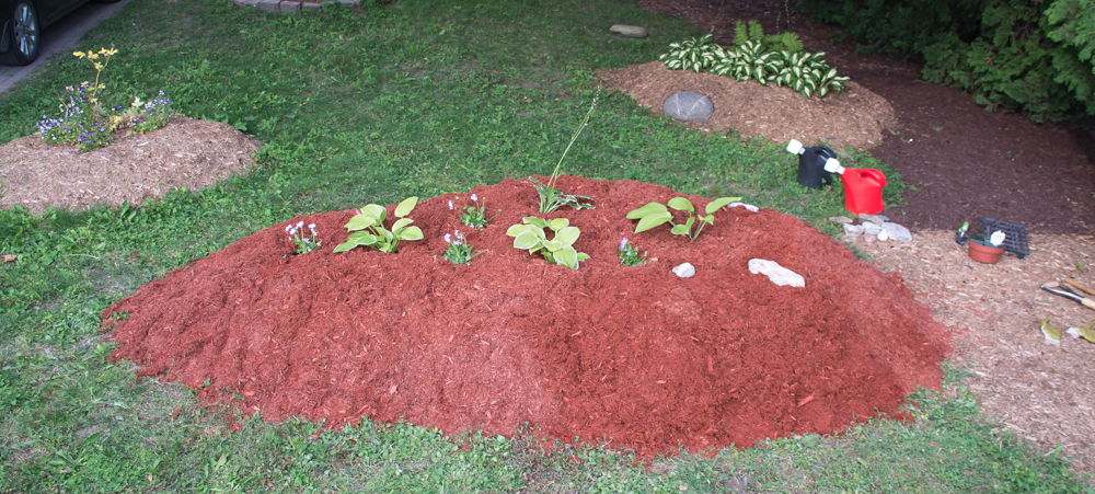 Raised bed garden with hostas.